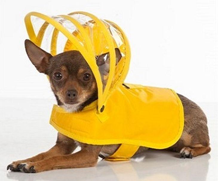 impermeabile cane