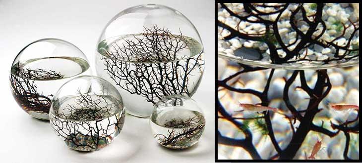 Ecosfera gamberetti rossi mini ecosistema vivente idea regalo originale