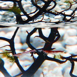 gamberetti acquario ecosfera