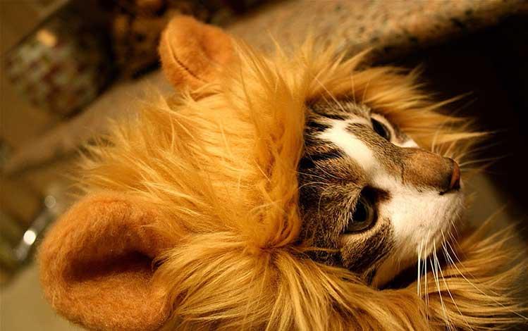costumi-per-gatti-da-leone
