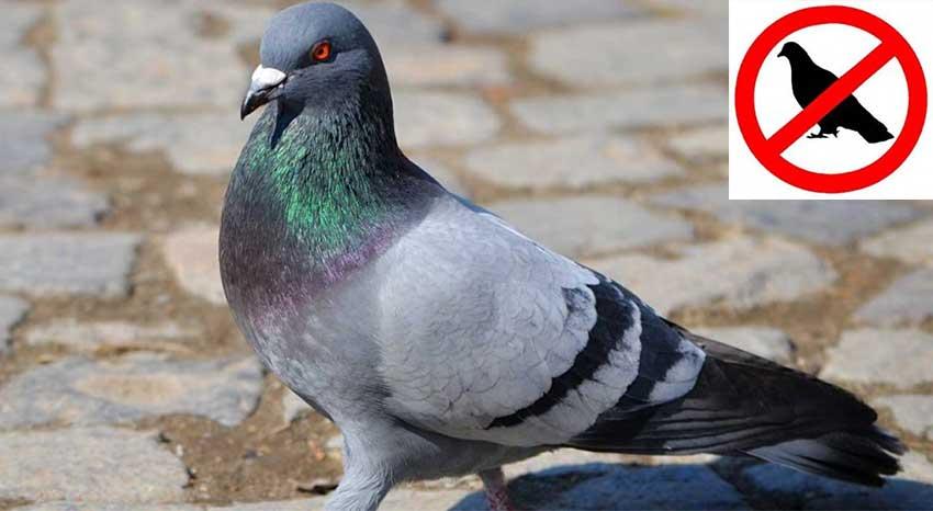 Senalto il reggiseno push up senza ferretto per alzare il for Dissuasori piccioni amazon