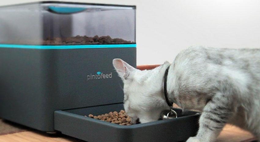 dispenser-cibo-gatti