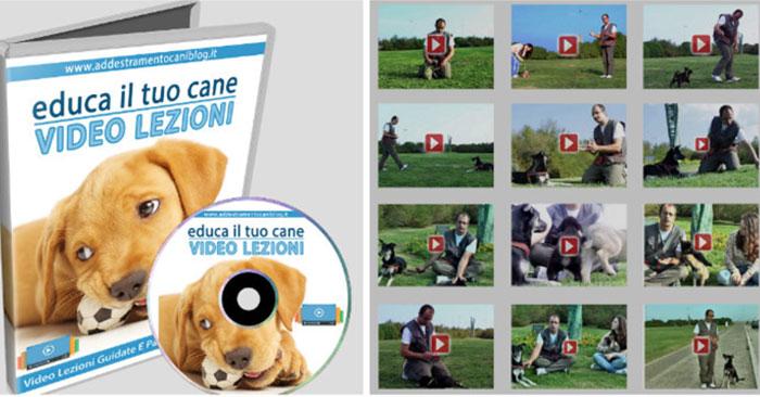 educa-il-tuo-cane-corso-video-lezioni